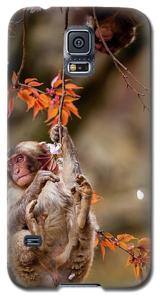 Galaxy S5 Case featuring the photograph Hang In There, Baby Redux by Rikk Flohr