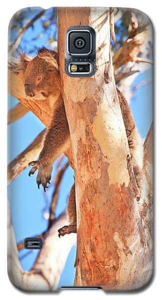 Galaxy S5 Case featuring the photograph Hanging Around, Yanchep National Park by Dave Catley