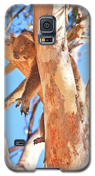Hanging Around, Yanchep National Park Galaxy S5 Case by Dave Catley