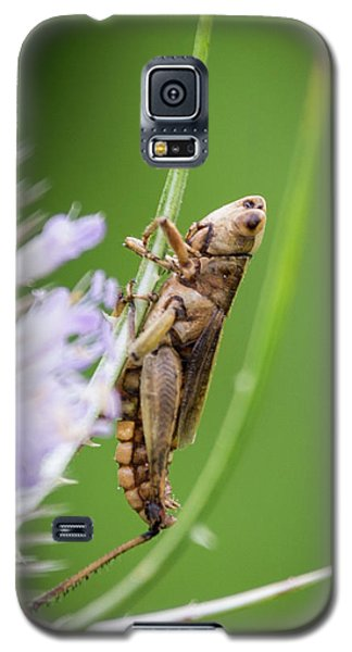 Hanging Out Galaxy S5 Case