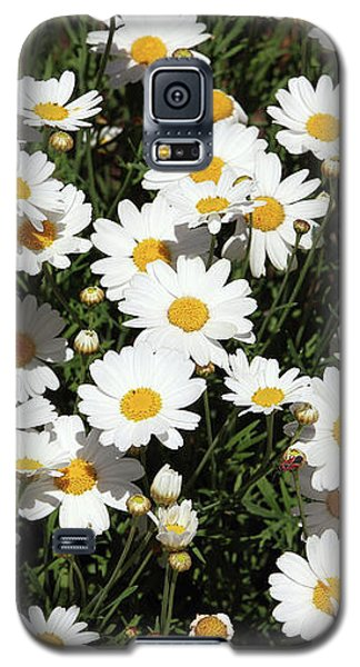 Daisy Galaxy S5 Case - Happy Daisies- Photography By Linda Woods by Linda Woods