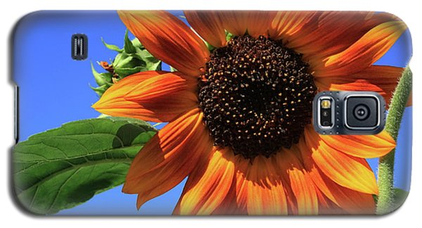 Happy Days Of Summer Galaxy S5 Case by Marjorie Imbeau