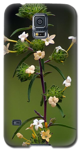 Galaxy S5 Case featuring the photograph Happy Flowers by Ben Upham III