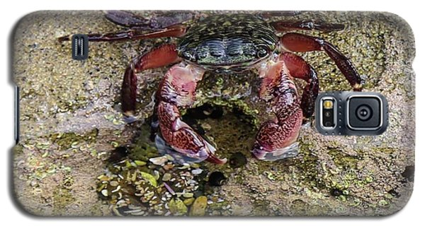 Happy Little Crab Galaxy S5 Case