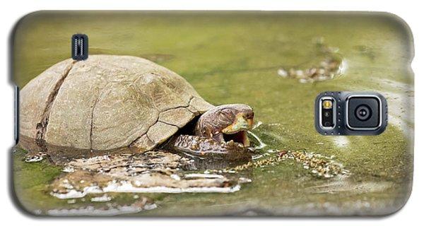 Happy Turtle Galaxy S5 Case