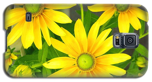 Happy Yellow Summer Cone Flowers In The Garden Galaxy S5 Case by Amy McDaniel
