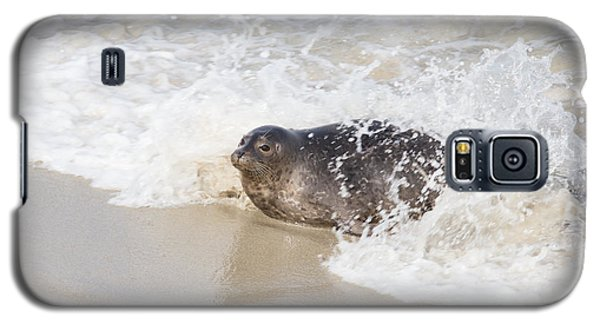 Harbor Seal Galaxy S5 Case