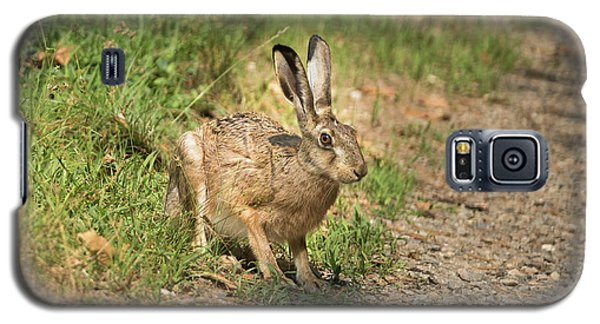 Hare In The Woods Galaxy S5 Case