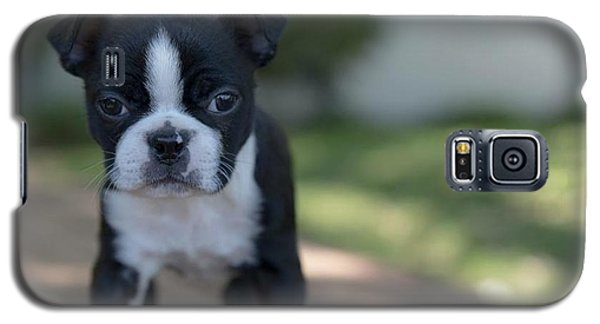 Galaxy S5 Case featuring the photograph Harley As A Puppy by Lora Lee Chapman