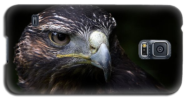 Galaxy S5 Case featuring the photograph Harris Hawk by Joerg Lingnau
