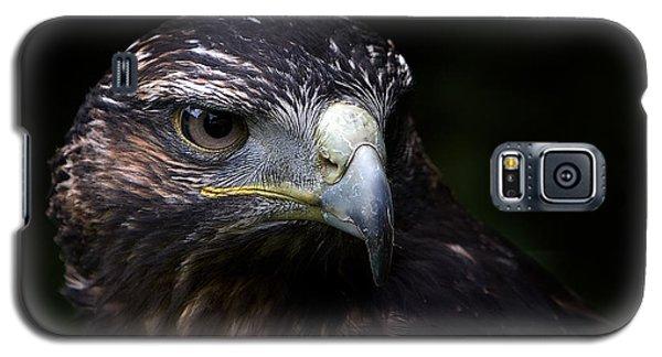 Harris Hawk Galaxy S5 Case by Joerg Lingnau