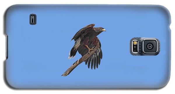 Harris Hawk - Transparent Galaxy S5 Case by Nikolyn McDonald