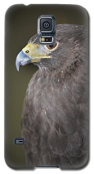 Galaxy S5 Case featuring the photograph Harris Hawk by Tyson and Kathy Smith