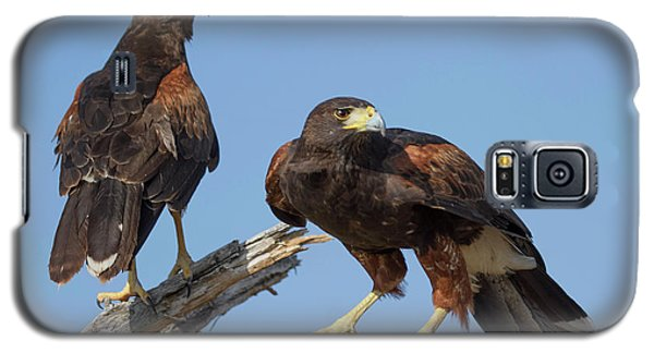 Harris Hawks Galaxy S5 Case