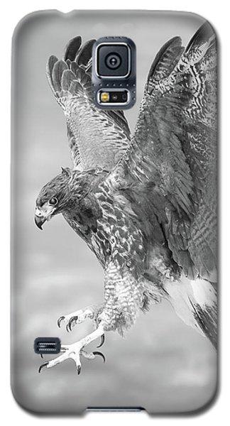 Harris's Hawk Galaxy S5 Case