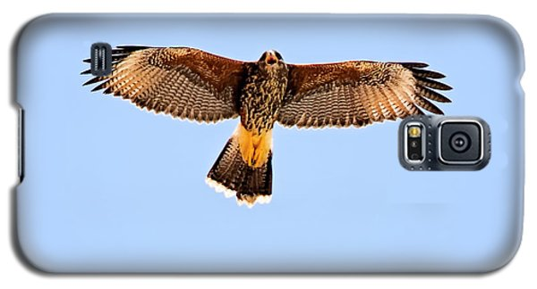 Galaxy S5 Case featuring the photograph Harris's Hawk H36 by Mark Myhaver