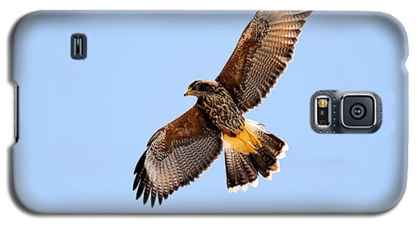 Galaxy S5 Case featuring the photograph Harris's Hawk H37 by Mark Myhaver