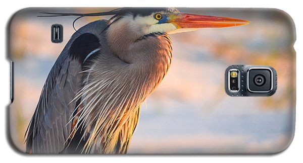 Harry The Heron With Plumage Close-up Galaxy S5 Case by Jeff at JSJ Photography