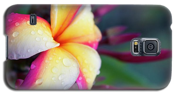 Galaxy S5 Case featuring the photograph Hawaii Plumeria Flower Jewels by Sharon Mau