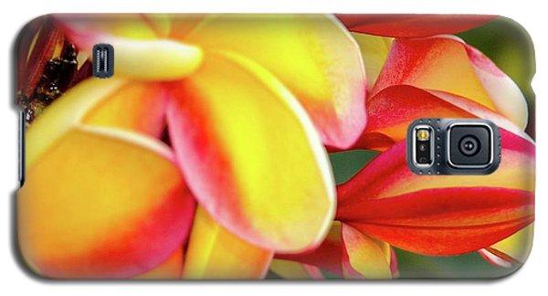 Hawaii Plumeria Flowers In Bloom Galaxy S5 Case