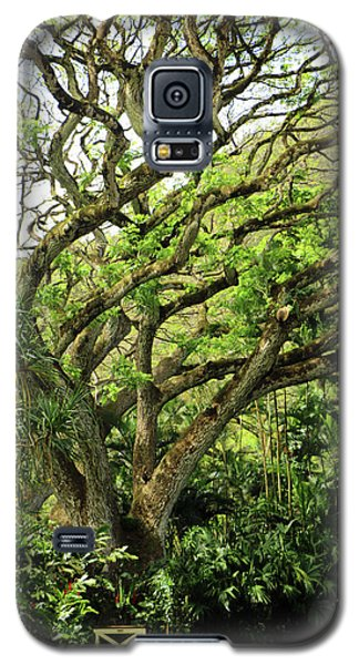 Galaxy S5 Case featuring the photograph Hawaii Tree-bard by Denise Moore