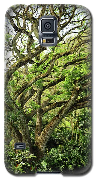 Hawaii Tree-bard Galaxy S5 Case by Denise Moore