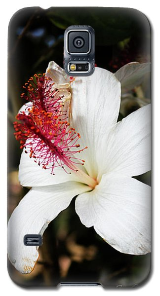 Galaxy S5 Case featuring the photograph Hawaiian Hibiscus  by Joann Copeland-Paul