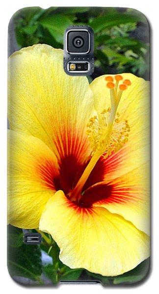 Hawaiian Hibiscus Galaxy S5 Case