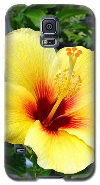 Hawaiian Hibiscus Galaxy S5 Case by Sue Melvin