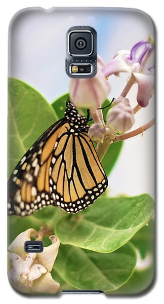 Hawaiian Monarch Galaxy S5 Case by Heather Applegate