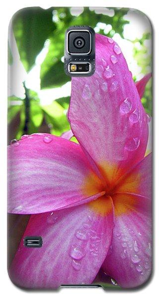 Hawaiian Plumeria Galaxy S5 Case