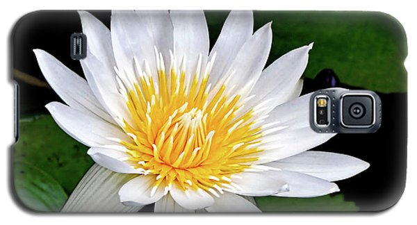 Hawaiian White Water Lily Galaxy S5 Case by Sue Melvin