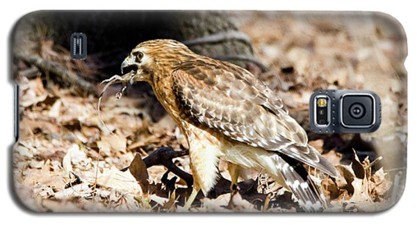 Galaxy S5 Case featuring the photograph Hawk And Gecko by George Randy Bass
