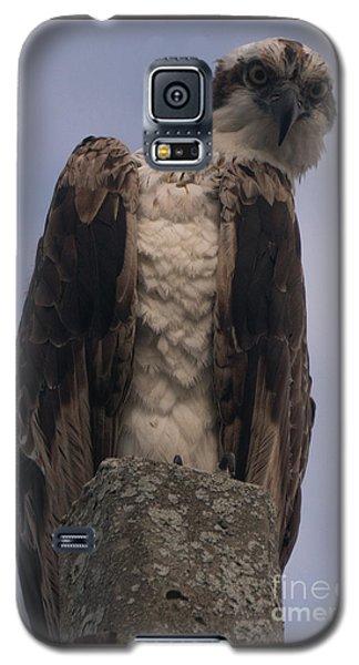 Hawk Attitude Galaxy S5 Case