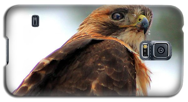 Galaxy S5 Case featuring the photograph Hawk by Bruce Patrick Smith
