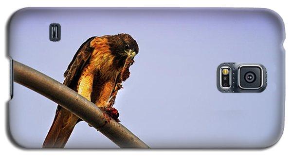 Hawk Eating Galaxy S5 Case