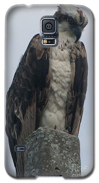 Hawk Facing Down Galaxy S5 Case