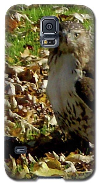 Hawk Falling Leaves Galaxy S5 Case