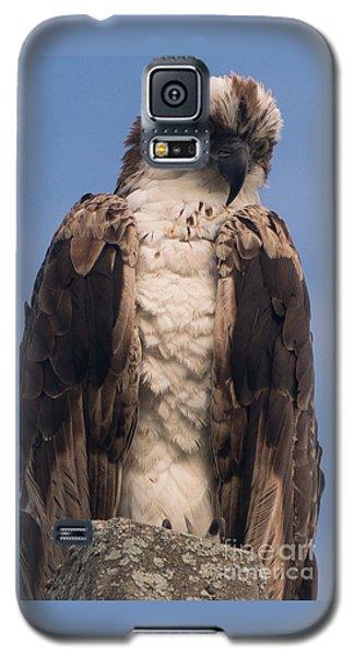 Hawk Glare Galaxy S5 Case