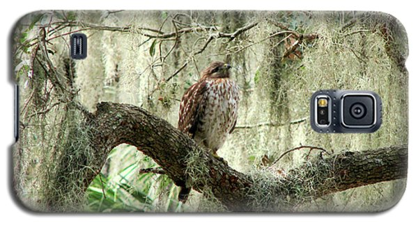 Hawk In Live Oak Hammock Galaxy S5 Case