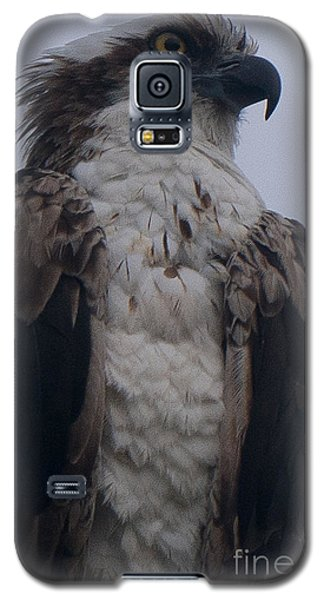 Hawk Looking Into The Distance Galaxy S5 Case