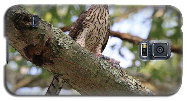 Hawk On A Branch Galaxy S5 Case
