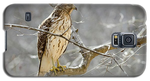 Galaxy S5 Case featuring the photograph Hawk On Lookout by George Randy Bass