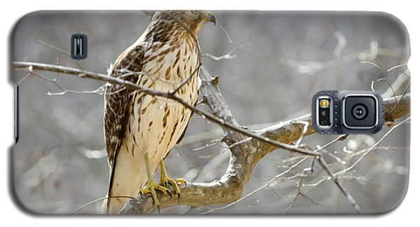 Hawk On Lookout Galaxy S5 Case by George Randy Bass