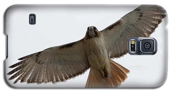 Hawk Overhead Galaxy S5 Case