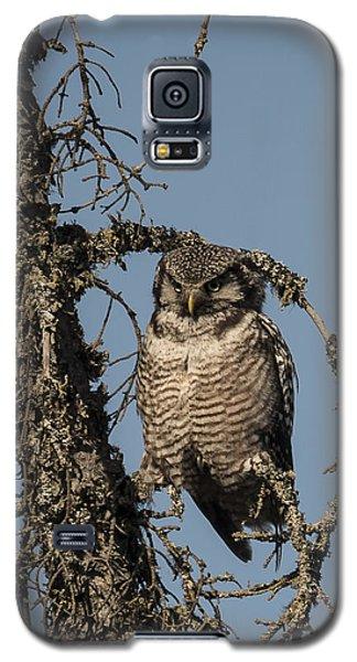 Hawk Owl Gaze Galaxy S5 Case