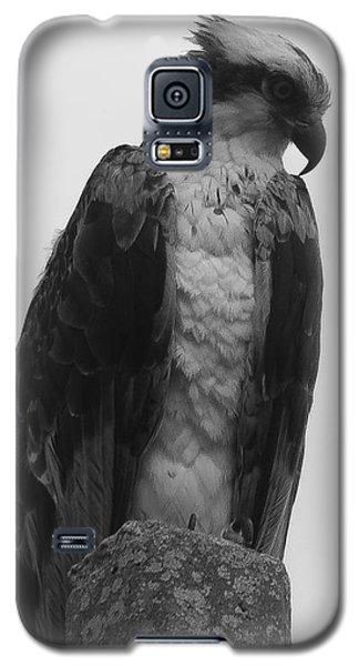 Hawk Perched Galaxy S5 Case