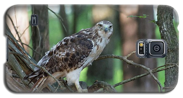 Hawk Portrait Galaxy S5 Case
