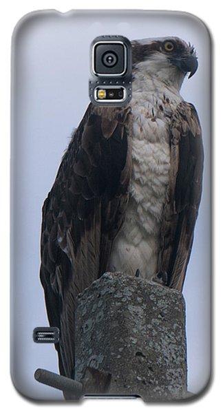 Hawk Pose Galaxy S5 Case