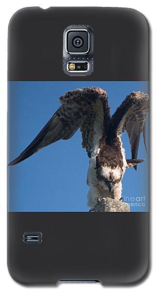 Hawk Prepares For Flight Galaxy S5 Case